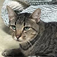 Adopt A Pet :: Barnie 01-25-14 - Bulverde, TX
