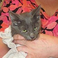 Adopt A Pet :: 361244 - Wildomar, CA