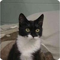 Adopt A Pet :: Dice - Mission, BC