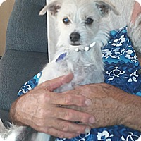 Adopt A Pet :: Spanky - Golden Valley, AZ
