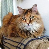 Adopt A Pet :: Norma Jean - Albany, NY