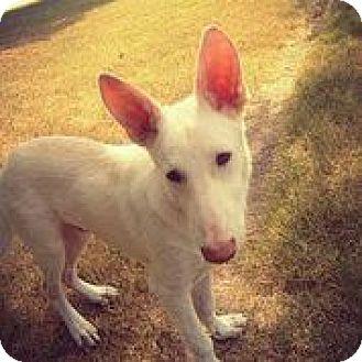 German Shepherd Dog Mix Dog for adoption in Austin, Texas - Logan