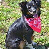 Adopt A Pet :: Pearl - Washington, IL