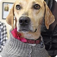 Adopt A Pet :: Lana - Homewood, AL