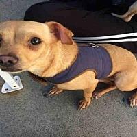 Adopt A Pet :: ANNETTE - Alameda, CA