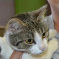 Adopt A Pet :: Dispatch - Monticello, GA