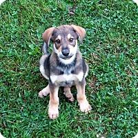 Adopt A Pet :: Norbert - New Oxford, PA