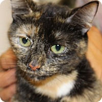 Adopt A Pet :: Snickers - Salisbury, MD