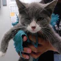 Adopt A Pet :: Debbie - Farmington, NM