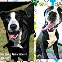 Adopt A Pet :: A081309 - Grovetown, GA