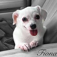 Adopt A Pet :: Fiona - Tampa, FL
