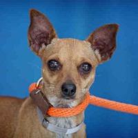Adopt A Pet :: SINIA - Downey, CA