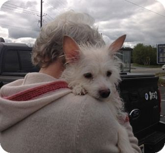 Cairn Terrier Mix Dog for adoption in Long Beach, New York - Betty