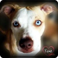 Adopt A Pet :: Fiona - Pascagoula, MS