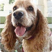 Adopt A Pet :: Jolly - Sugarland, TX