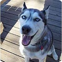 Adopt A Pet :: Crystal - Belleville, MI