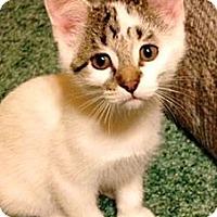 Adopt A Pet :: Beezus - Green Bay, WI