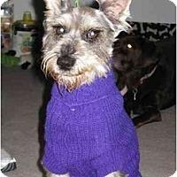 Adopt A Pet :: Grommit - Riverside, CA
