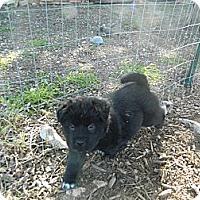 Adopt A Pet :: Marvelous Marvin - Bulverde, TX