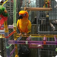 Adopt A Pet :: BamBam - Woodbridge, NJ