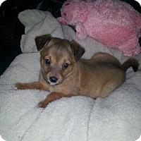 Adopt A Pet :: Sparks - Denver, IN