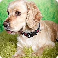 Adopt A Pet :: MAISIE - Tacoma, WA