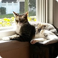 Adopt A Pet :: Dwayne - Speonk, NY