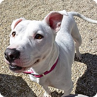Adopt A Pet :: Icey - Meridian, ID