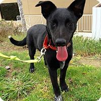 Adopt A Pet :: Sthira - Mission Viejo, CA