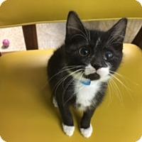 Adopt A Pet :: Moonbeam - Medina, OH