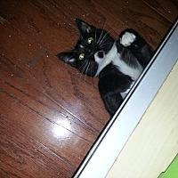 Adopt A Pet :: Trudy - Tampa, FL