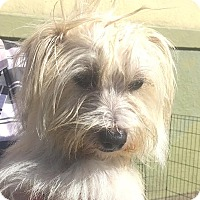 Adopt A Pet :: Jerry - San Francisco, CA