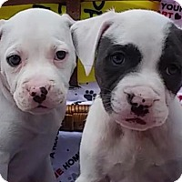 Adopt A Pet :: Freddie and Frazier - East Sparta, OH