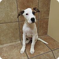 Adopt A Pet :: Arapahoe *Petsmart GB* - Appleton, WI