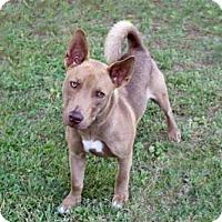 Adopt A Pet :: THOR - richmond, VA