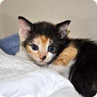 Adopt A Pet :: Tasha (FCID# 04/10/2017 - 211 Foster) - Greenville, DE