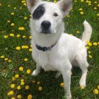 Adopt A Pet :: Suzie - Meadow Lake, SK
