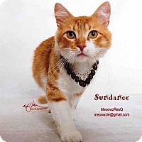 Adopt A Pet :: Sundance - Orange, CA