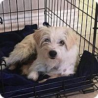 Adopt A Pet :: Lausanne - McKinney, TX