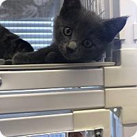 Adopt A Pet :: Elliott - Douglas, WY