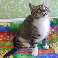 Adopt A Pet :: Scarlett - Red Wing, MN