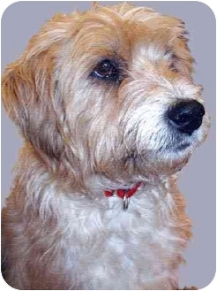 Terrier (Unknown Type, Medium) Mix Dog for adoption in Grass Valley, California - Betty