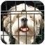Photo 1 - Lhasa Apso Dog for adoption in Provo, Utah - KIBBEE