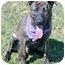 Photo 1 - Shepherd (Unknown Type) Mix Dog for adoption in Corona, California - DEXTER