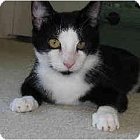 Adopt A Pet :: Dillon - San Ramon, CA
