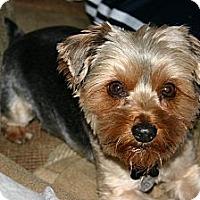 Adopt A Pet :: Toby - Goodyear, AZ