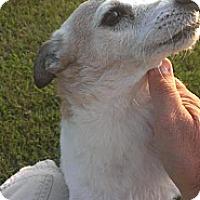 Adopt A Pet :: DeeDee - Oklahoma City, OK