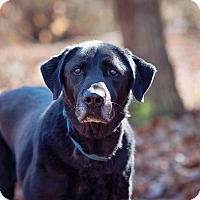Adopt A Pet :: Willy - Lewisville, IN
