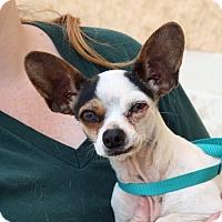 Adopt A Pet :: Bunny - Palmdale, CA
