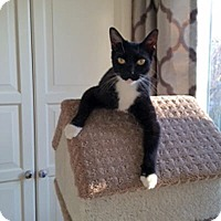 Adopt A Pet :: Jimmy - Mississauga, Ontario, ON